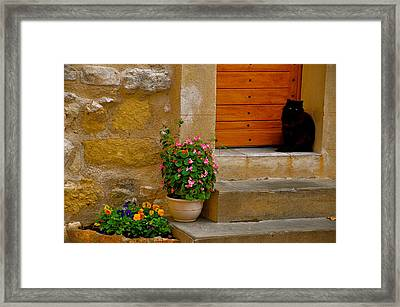 Cat In Capestang France Framed Print by K C Lynch