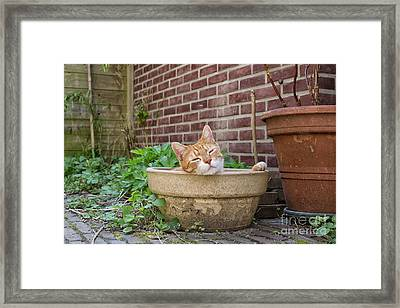 Framed Print featuring the photograph Cat In Empty Pot by Patricia Hofmeester