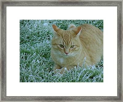Cat In Frosty Grass Framed Print