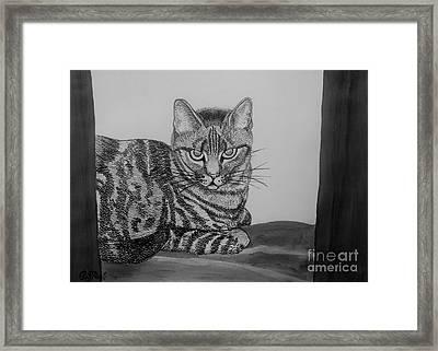 Cat In Monochrome Framed Print by Caroline Street