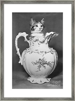 Cat In Pitcher Framed Print by Larry Keahey