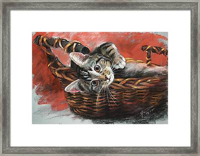 Cat In The Basket Framed Print by Ylli Haruni