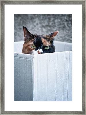 Framed Print featuring the photograph Cat In The Box by Laura Melis