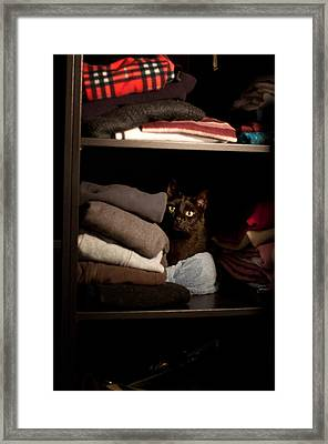 Framed Print featuring the photograph Cat In The Closet by Laura Melis
