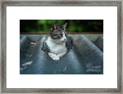 Cat In The Cradle Framed Print by Venura Herath