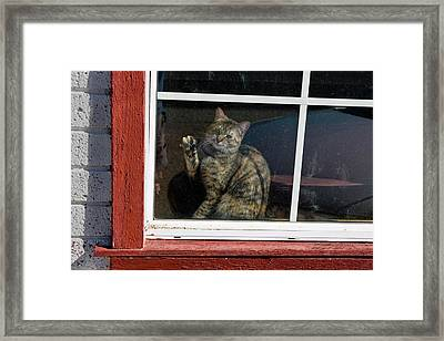 Cat In The Red  Window Framed Print