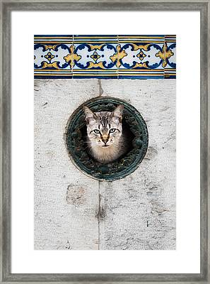 Cat In The Wall I Framed Print by Marco Oliveira