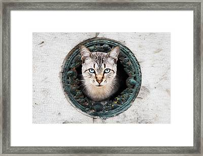 Cat In The Wall II Framed Print by Marco Oliveira
