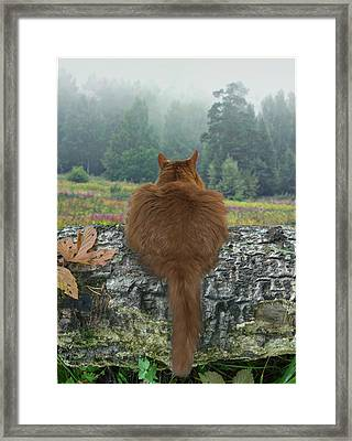 Framed Print featuring the photograph Cat In The Wild by Vladimir Kholostykh