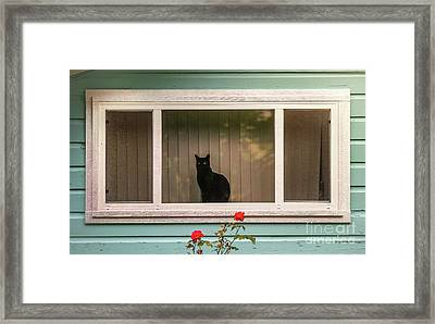 Cat In The Window Framed Print by Robert Frederick
