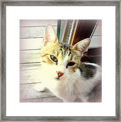 The Cat Is Asking A Difficult Question  Framed Print