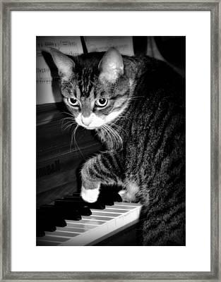 Cat Jammer Framed Print
