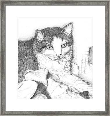 Domestic Cat Framed Print