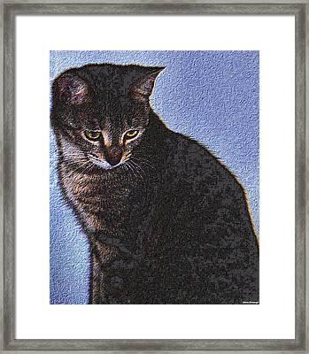 Cat Framed Print by Johann Todesengel