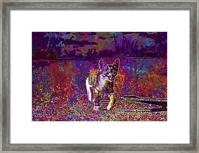 Framed Print featuring the digital art Cat Kitten Cat Baby Mackerel  by PixBreak Art