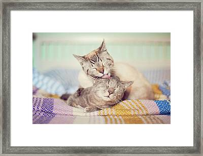 Cat Licking Another Cat Framed Print