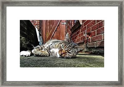 Cat Life Framed Print