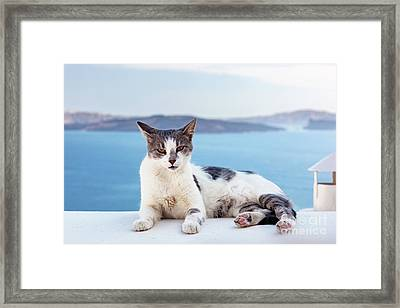 Cat Lying On Stone Wall In Oia Town, Santorini, Greece. Aegean Sea  Framed Print by Michal Bednarek