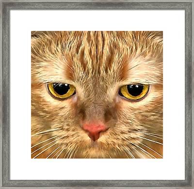 Cat Musya Framed Print