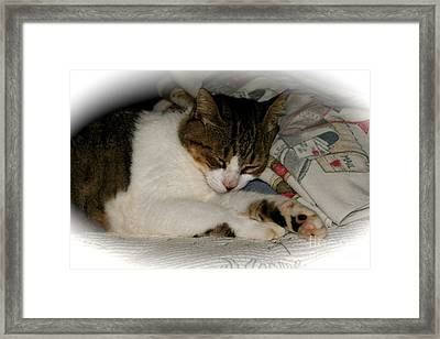 Framed Print featuring the photograph Cat Nap by The Art of Alice Terrill