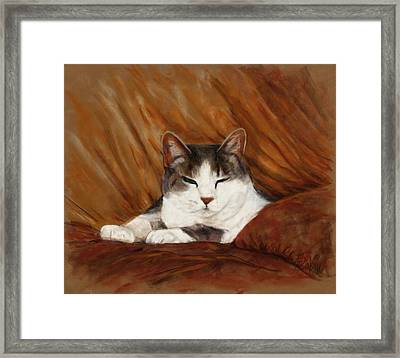 Cat Nap Framed Print by Billie Colson