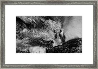 Framed Print featuring the photograph Cat Nap by Juls Adams