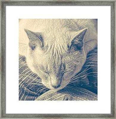 Cat Nap Framed Print by Linda Phelps