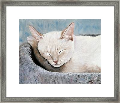 Cat Nap Framed Print by Merle Blair