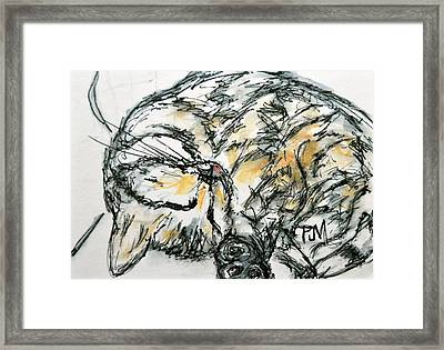 Cat Nap Framed Print by Pete Maier