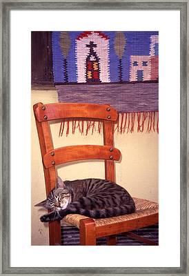 Cat Nap Framed Print by Steve Outram