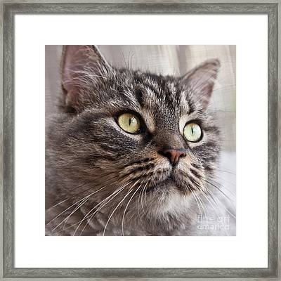 Cat Of Nicole 4 Framed Print by Heiko Koehrer-Wagner