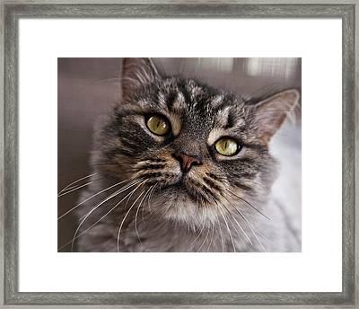 Cat Of Nicole 5 Framed Print by Heiko Koehrer-Wagner