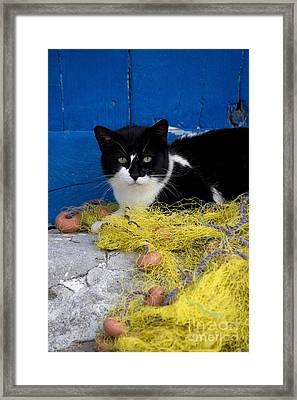 Cat On A Fishing Net Framed Print by Jean-Louis Klein & Marie-Luce Hubert