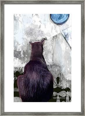 Cat's Blue Moon Framed Print