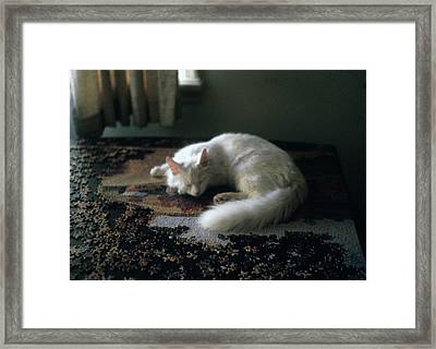 Cat On A Puzzle Framed Print
