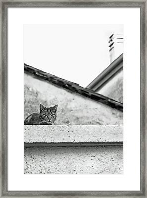 Cat On A Roof, Varenna Framed Print