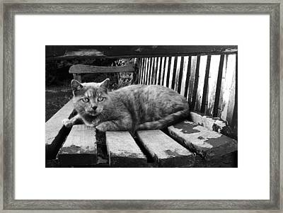 Cat On A Seat Framed Print by RKAB Works