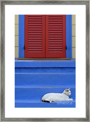 Cat On Blue Steps Framed Print by Jeanne  Woods