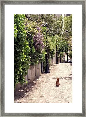 Cat On Cobblestone Framed Print