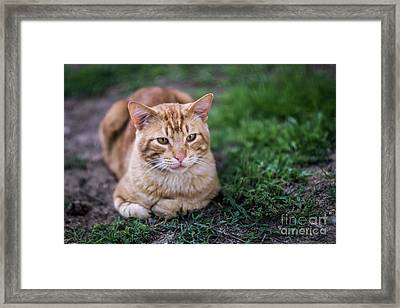 Framed Print featuring the photograph Cat On Genoves Park Cadiz Spain by Pablo Avanzini