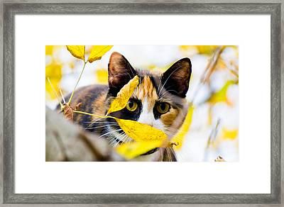 Cat On The Prowl Framed Print