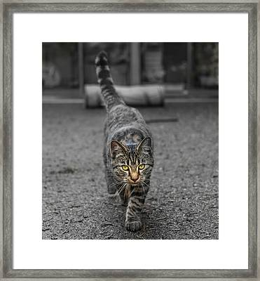 Cat On The Prowl Framed Print by Rick Deacon