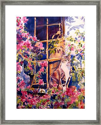 Cat On The Sill In Trapani Framed Print by Joyce Kanyuk