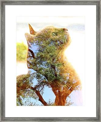 Cat Or Tree Framed Print