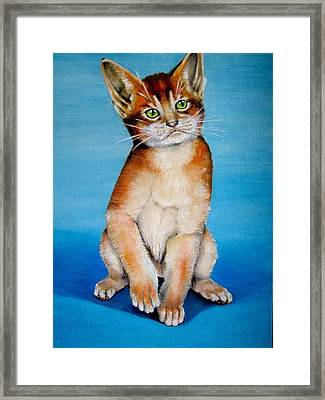 Cat Original Oil Painting Framed Print by Natalja Picugina
