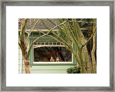 Cat Pals Waiting Framed Print