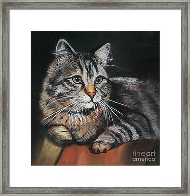 Cat Pastel Drawing Framed Print