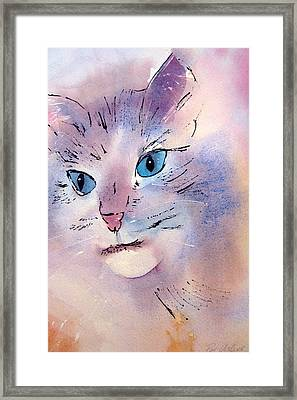Cat Framed Print by Pat Vickers