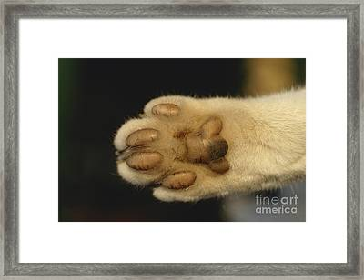 Cat Paw Framed Print by Frederic Jacana
