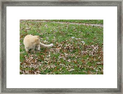 Framed Print featuring the photograph Cat Playing In The Leaves by Skyler Tipton